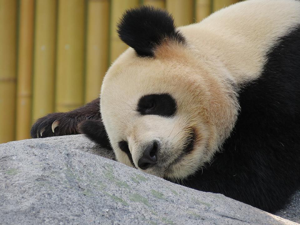 パンダ・ペンギンアップデートでペナルティを受けないためのSEO