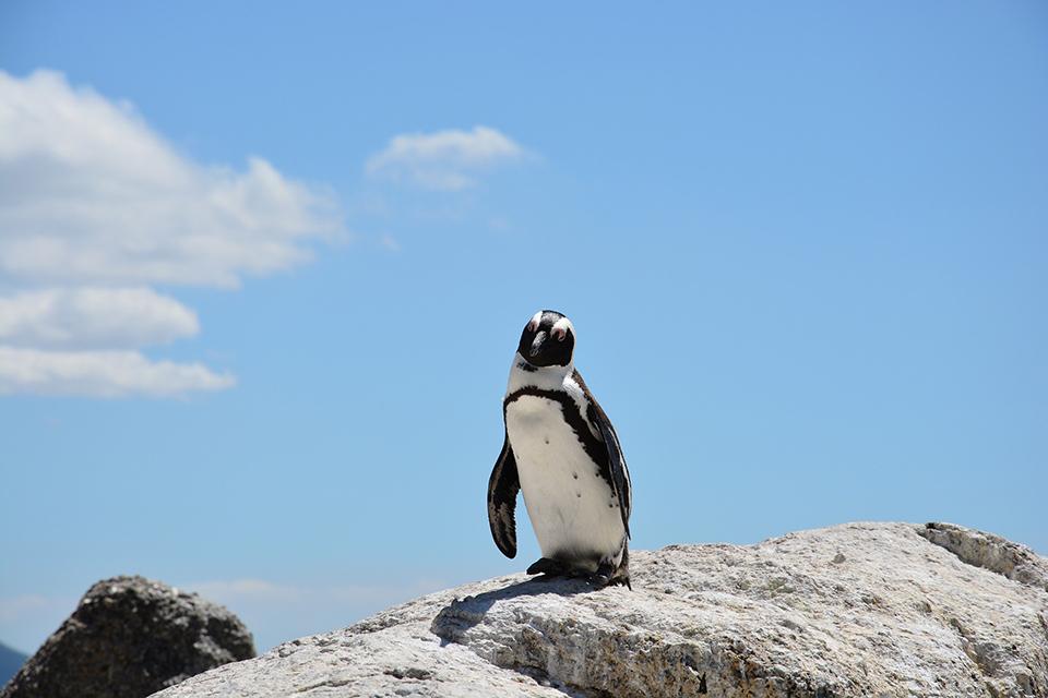 seo-penguin-panda02.jpg